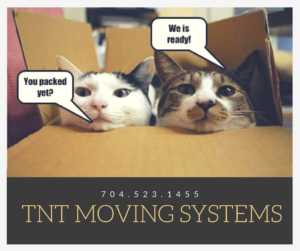 Cats in box ready to move