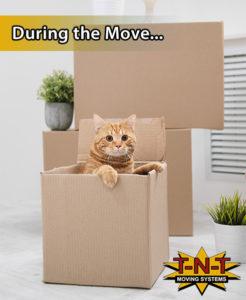 Tips for Moving After Divorce
